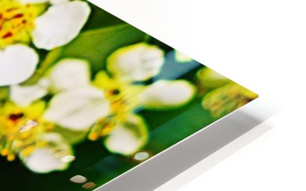 Springtime HD Sublimation Metal print