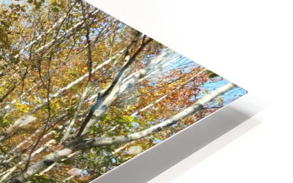 Fall foliage, Mount Pisgah, NB, Oct. 6, 2013 HD Sublimation Metal print