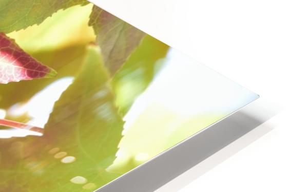 Leaves Macro 1  HD Sublimation Metal print