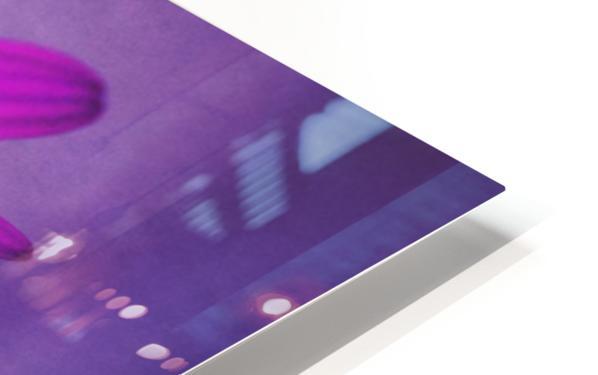 Purple Osteospermum HD Sublimation Metal print