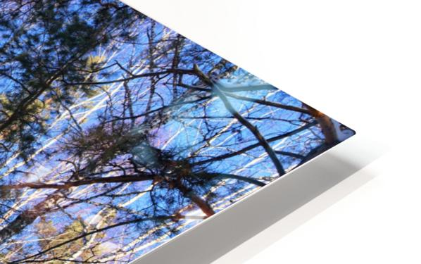 Winter. Forest. Shadow HD Sublimation Metal print