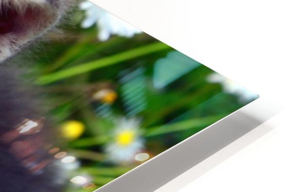 Smell the grass HD Sublimation Metal print