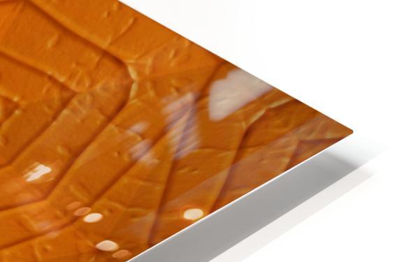 IMG_5036 HD Sublimation Metal print