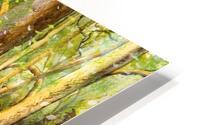 Bluebell Wood  HD Metal print
