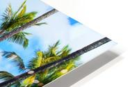 palm trees with green tree and blue cloudy sky in summer HD Metal print