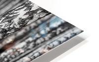 The Birches HD Metal print