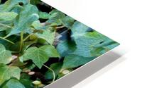 Green Ivy HD Metal print