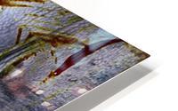 Kifaru HD Metal print