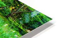 wooden bridge across a pond with duckweed and leaves of water lilies HD Metal print