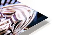 Lion Fish HD Metal print
