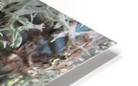 Bark With Lichen 02 HD Metal print