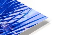 Blue Palms HD Metal print