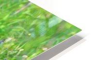 2827-Turn around HD Metal print