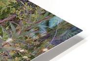 Moose antler HD Metal print