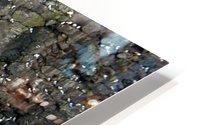 Seals HD Metal print