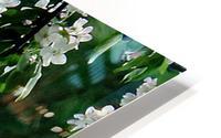 DazzleBlossoms Impression metal HD