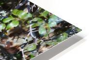 Blue Reflective Bird HD Metal print
