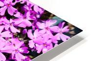 Pink Petals HD Metal print
