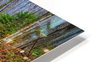 White Birch - APC-261 HD Metal print