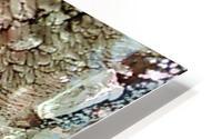 1538708521285 HD Metal print