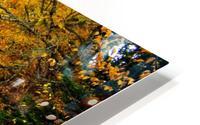 10.9.18 Fall HD Metal print