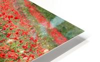 Rolling Fields with Poppies HD Metal print