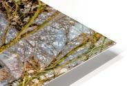 Canalside Living HD Metal print