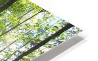 Landscape (51) HD Metal print