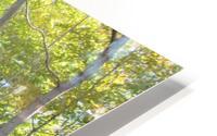 Landscape (288) HD Metal print