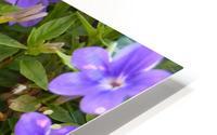 Purple Flowers Photograph HD Metal print