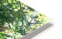 Japanese Lavender Tree Dow Gardens 2018 HD Metal print
