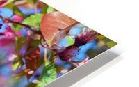 Ticonderoga Crab Apple Flowers in May HD Metal print