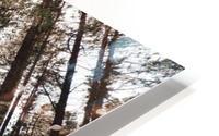 See the Sun HD Metal print