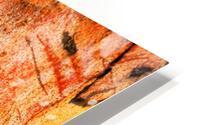 Eucalyptus Bark And Patterns HD Metal print