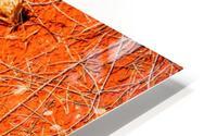 Seeds of the Desert HD Metal print