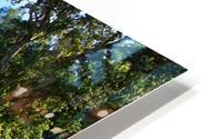 IMG_8112 HD Metal print