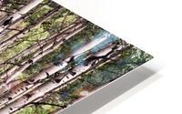Aspens In Banff National Park at Muleshoe HD Metal print