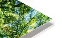 Tree Than Owns Itself   Athens GA 06567 HD Metal print