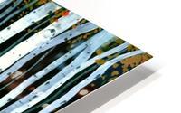 Autumn Aspens HD Metal print