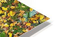 An Autumn Carpet HD Metal print