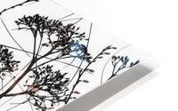 Silhouette of dried plants HD Metal print