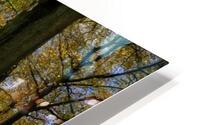 Autumn Forest HD Metal print