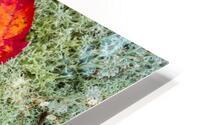 Leaves  N  Lichen ap 1553 HD Metal print