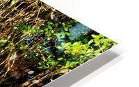 Mangrove roots HD Metal print