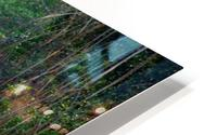 Caroni Swamp   Trinidad HD Metal print