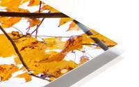 Maple Leaves ap 1589 HD Metal print