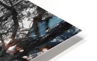 Nature Trail ap 2081 B&W HD Metal print