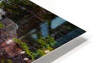 Moss   Lichen ap 2294 HD Metal print
