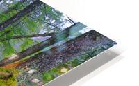 Moss   Lichen ap 2196 HD Metal print