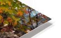 Blueberries ap 2526 HD Metal print